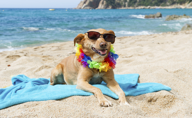 Relaxing dog at the beach