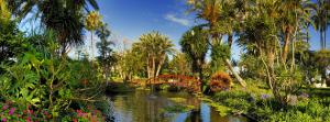 Photo Jardín de Aclimatación de la Orotava